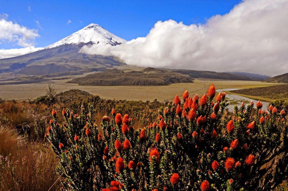 zwiedzanie parku narodowego ze słynnym wulkanem cotopaxi