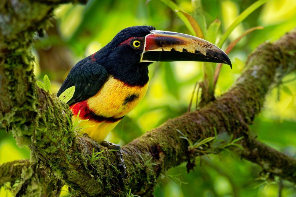 podroz do dzungli amazonskiej ekwadoru