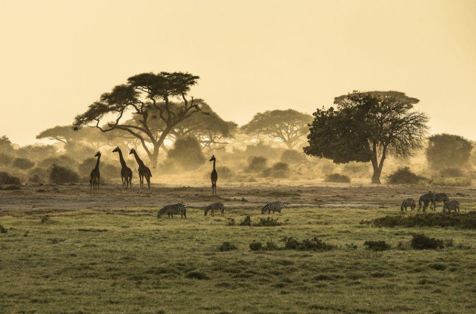 wyspa crescent w kenii