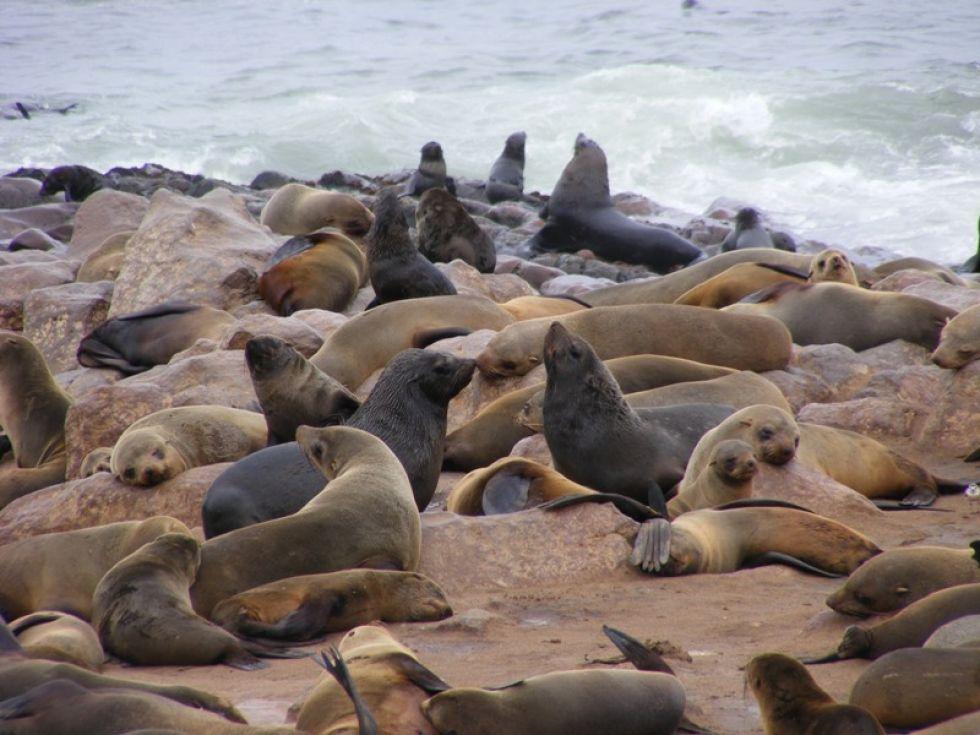 wypatrywanie fok w okolicach swakopmund