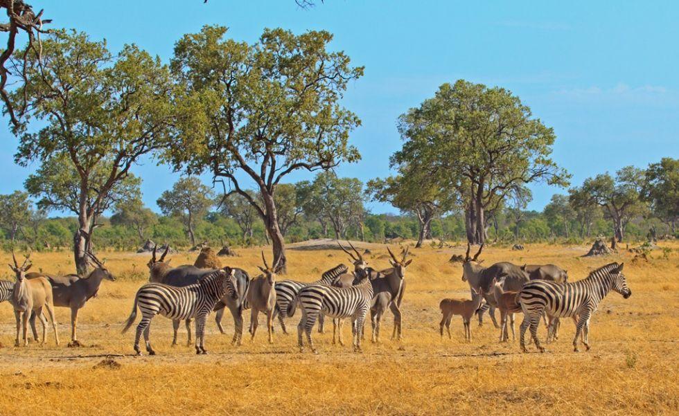 Park Narodowy Etoszy w Afryce