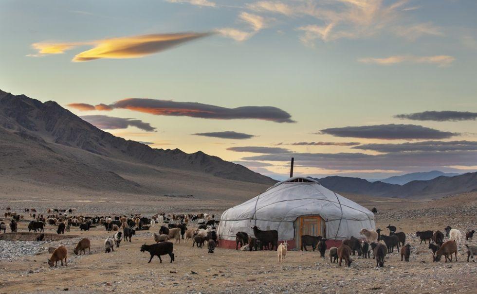 Moloka i zwierzęta na mongolskim stepie.