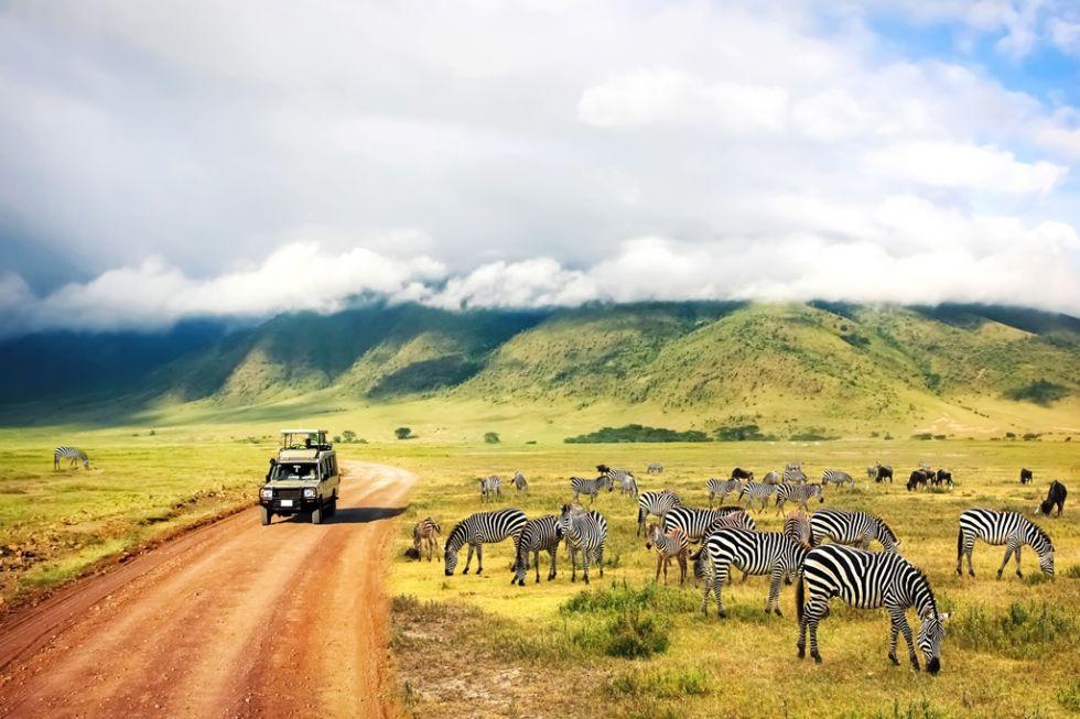 Całodzienne safari w Parku Narodowym Serengeti. Poszukiwania