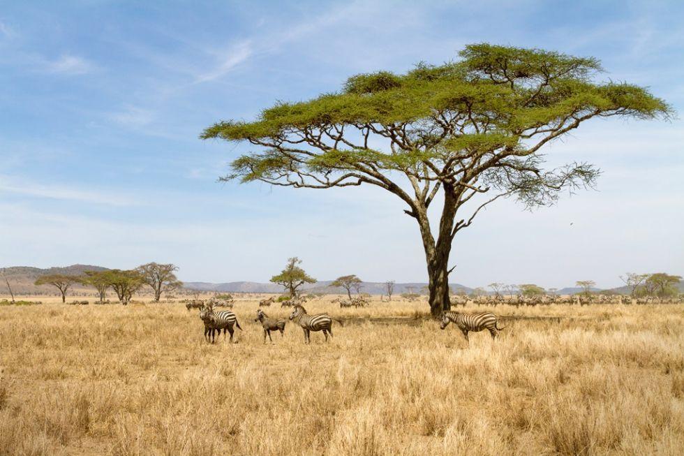 park-narodowy-serengeti