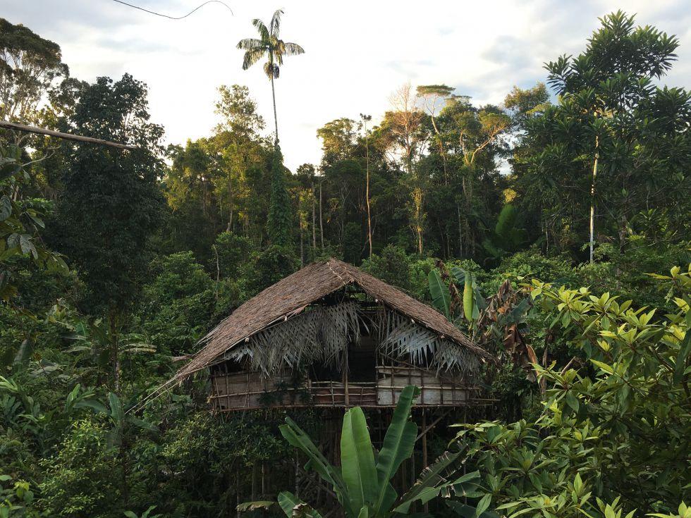 Chata plemienia Kaorowajów w papuaskiej dżungli.